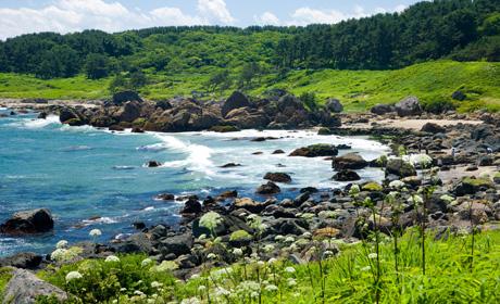 種差(たねさし)海岸